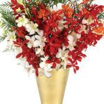 Dec - Merry Christmas Orchids