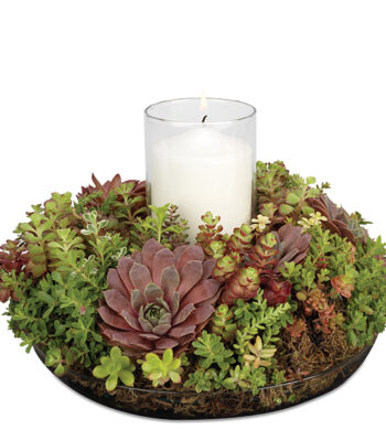 Let It Glow Succulent Candle Ring