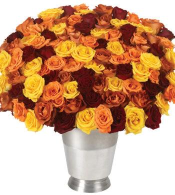 100 Autumn Roses