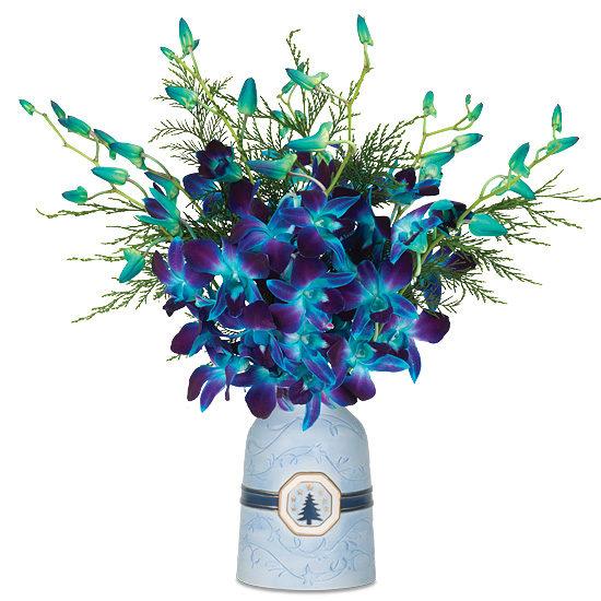 Sapphire Orchids
