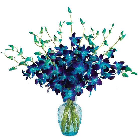 Stunning Sapphire Orchids with vase