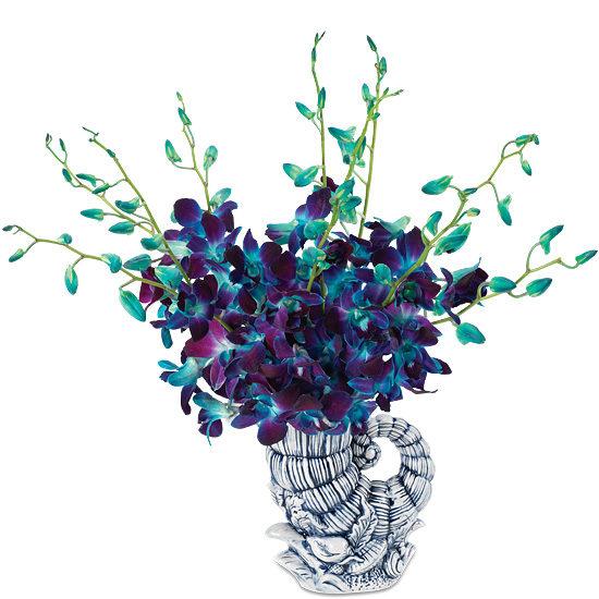 Ocean Blue Orchids
