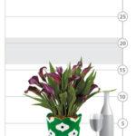 Purple Calla Lily Plant
