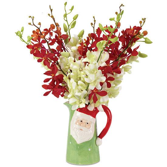 Santa Claus Orchids