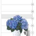 Botanique Blue Hydrangea Plant shown to scale
