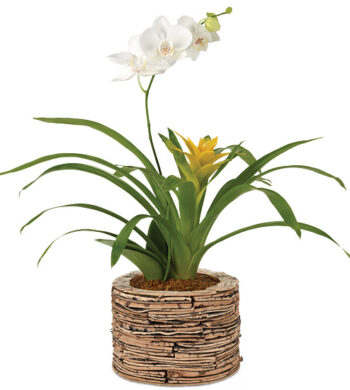 Aloha Orchid & Bromeliad Garden with cachepot