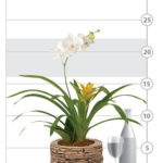 Aloha Orchid & Bromeliad Garden shown to scale