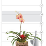 Bountiful Bromeliad & Orchid Garden