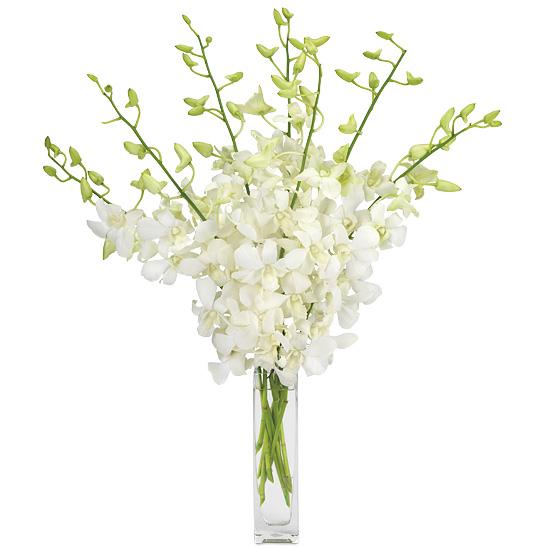 Boutique Dendrobiums with signature glass vase