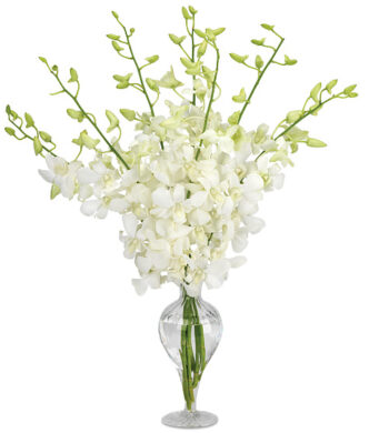 Boutique Dendrobiums with vase