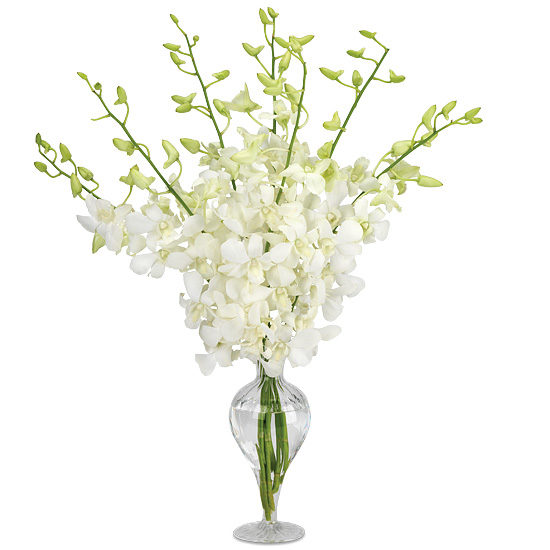 Boutique Dendrobiums with vase