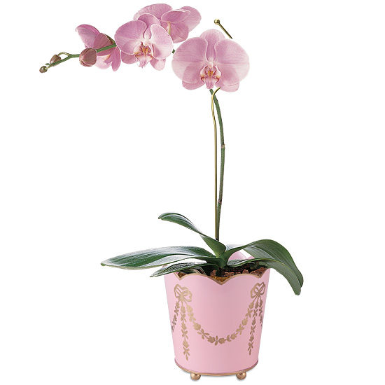 Mother's Day Orchid Plant with cachepot and plant pin