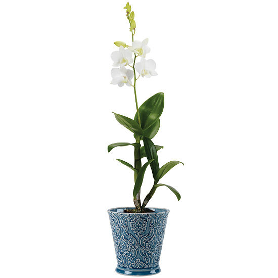 White Dendrobium Orchid Plant with cachepot