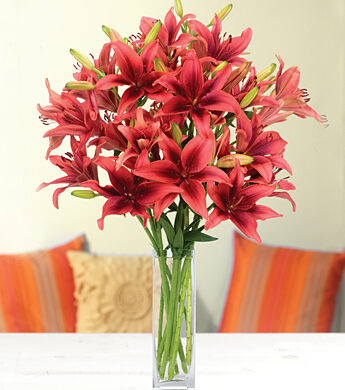 Year of Lilies