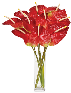 Dec - Red Anthuriums