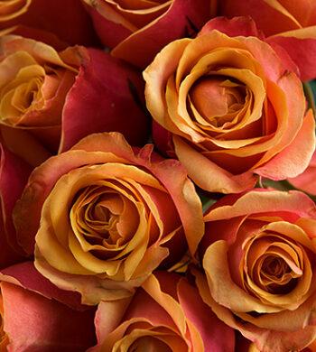 Order DIY Flowers | DIY Bulk Flowers - Calyx Flowers