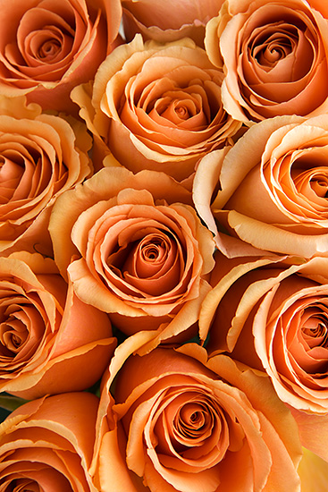 Peach Cinnamon Roses