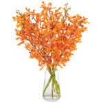 The Year of Orchids