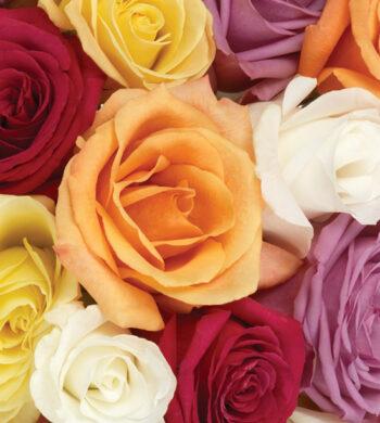 Assorted Rainbow Roses