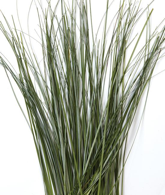 bear grass calyx flowers inc