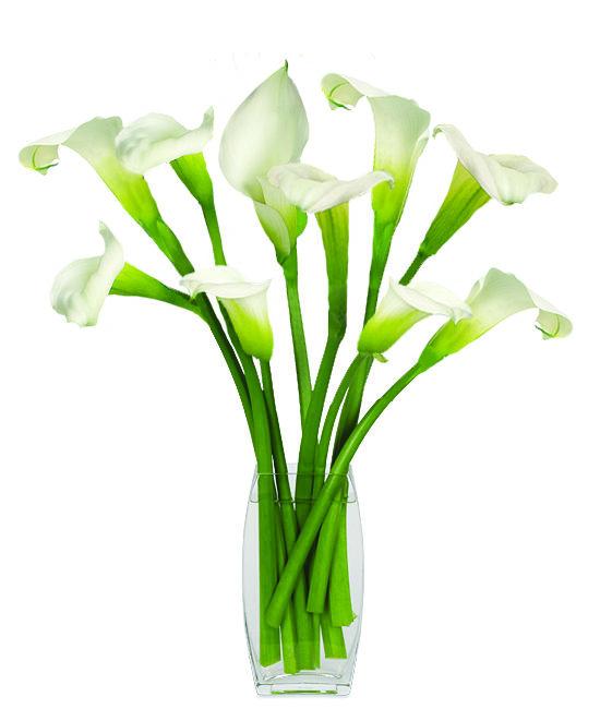 Jun - Green Goddess Calla Lilies