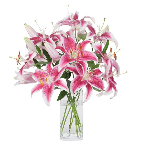 Feb - Starfighter Oriental Lilies