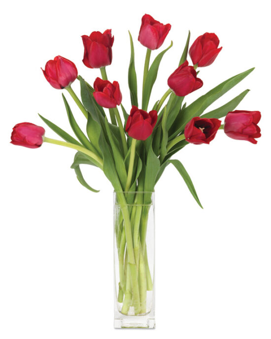 Mar - Red Dutch Tulips