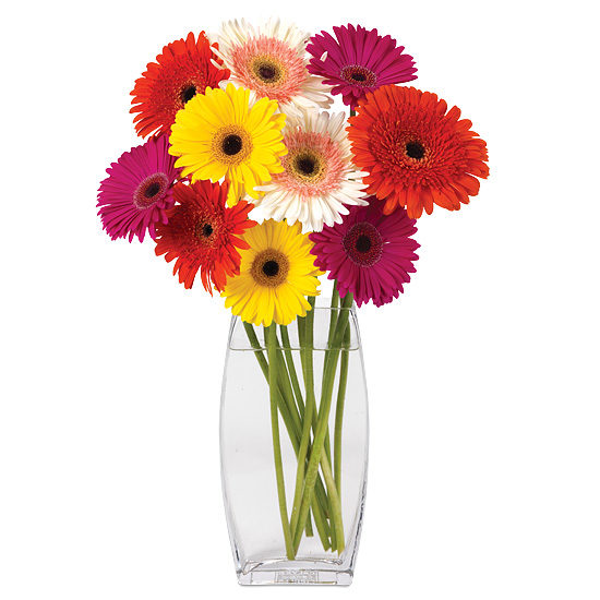 May - Mixed Gerbera