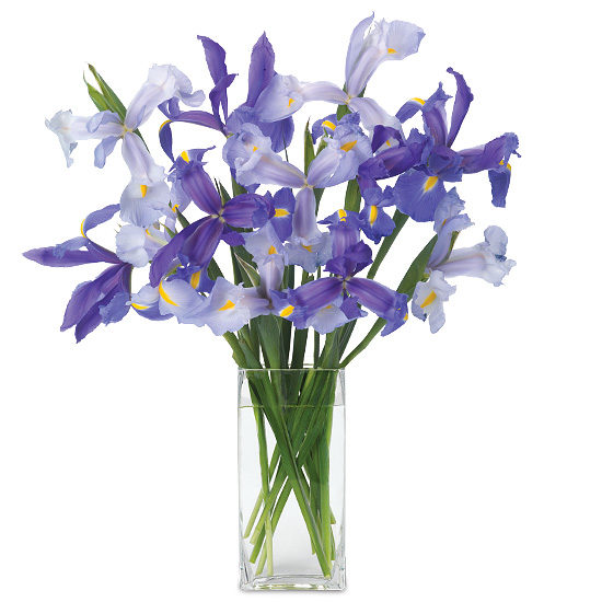 Jul - Mixed Iris