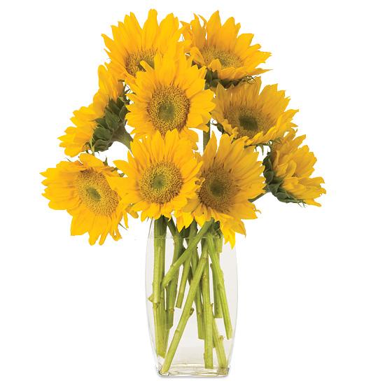 Sep - Sunflowers