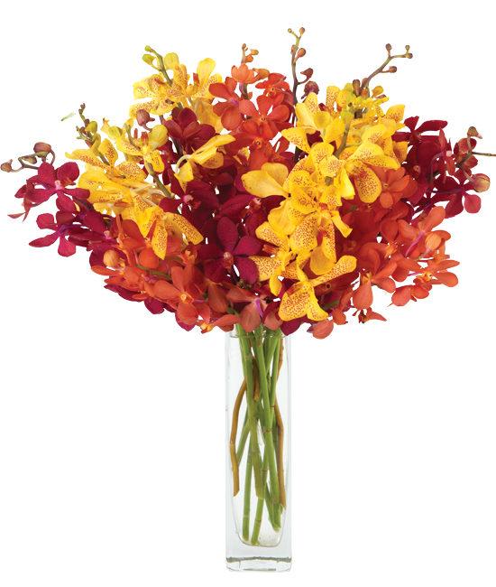 Nov - Mixed Orchids