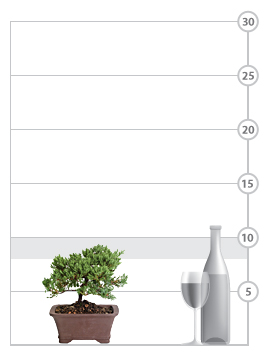 Venerable Bonsai shown to scale