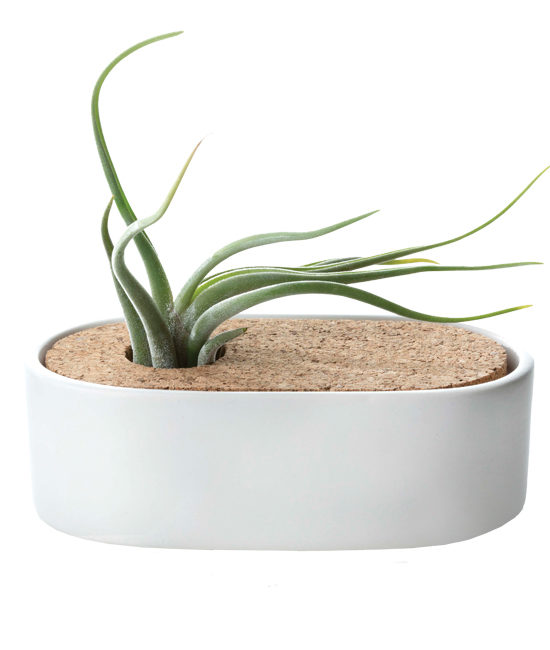 Aug - Free Spirit Airplant