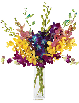 Jewel Orchids with signature glass vase