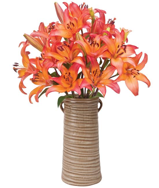 Sunset Lilies