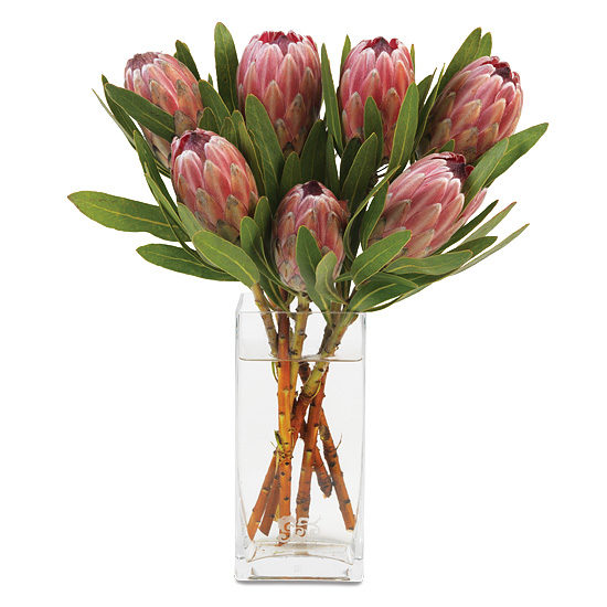 Pink Protea Bouquet with signature glass vase