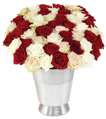 50 holiday roses