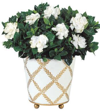 send gardenia flowers  gardenia plants  calyx flowers, Beautiful flower