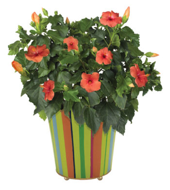 Birthday Flower Bouquets Send Birthday Flowers Calyx Flowers