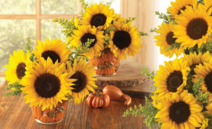 Pumpkin Sunflowers