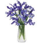 Lavish Lavender Iris with signature glass vase