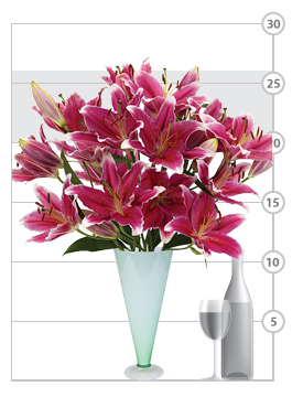 Kissproof Lilies shown to scale