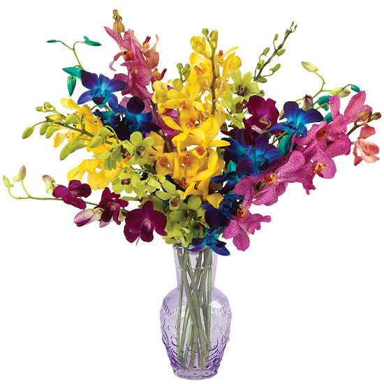 Jewel Orchids with vase