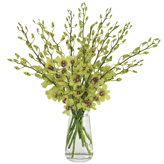 Zen Dendrobium Orchid Bouquet
