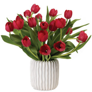 Red Dutch Tulips
