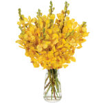 Oh Lovely Day Orchids with signature glass vase