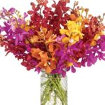 Maine Attraction Orchid Bouquet with signature glass vase