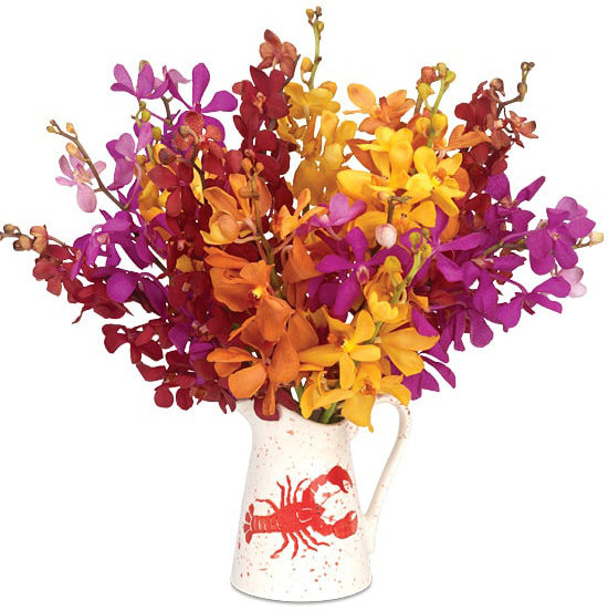 Maine Attraction Orchid Bouquet with Lobster Pitcher