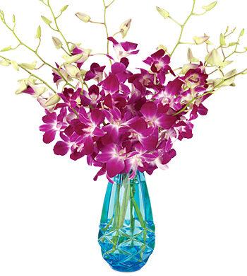 Aurora Orchids