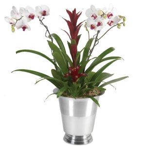 Tropical Elegance Orchid Garden